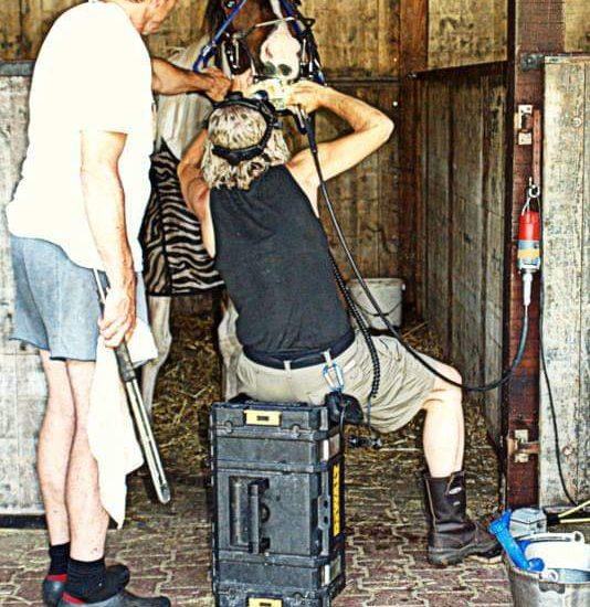 Gebitsbehandeling voor paarden | Anne Nikkels Dierenartspraktijk Dedemsvaart Balkbrug